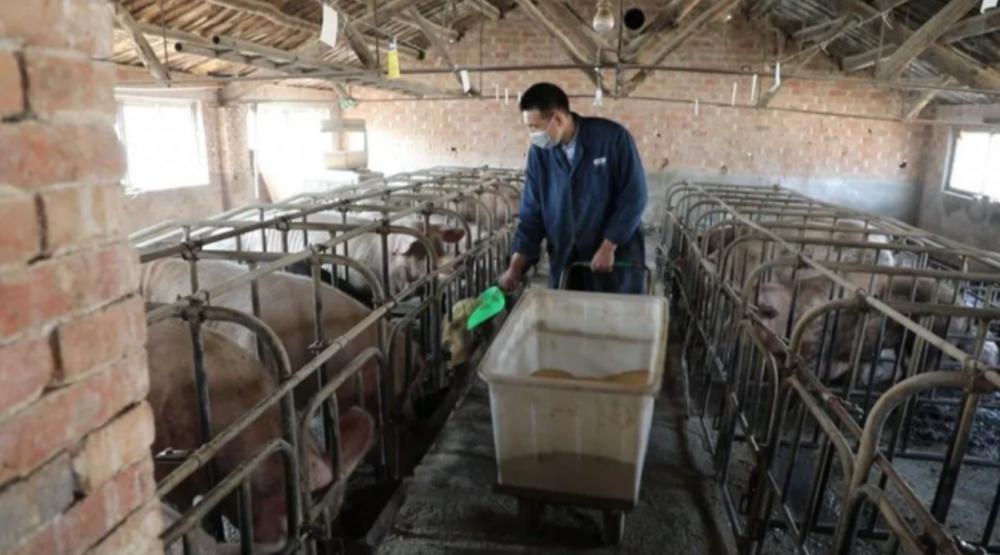 省农担:创新金融产品 破解畜牧养殖户用款难题
