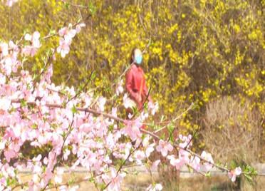 68秒|潍坊安丘景区有序开放 游客拥抱魅力春光