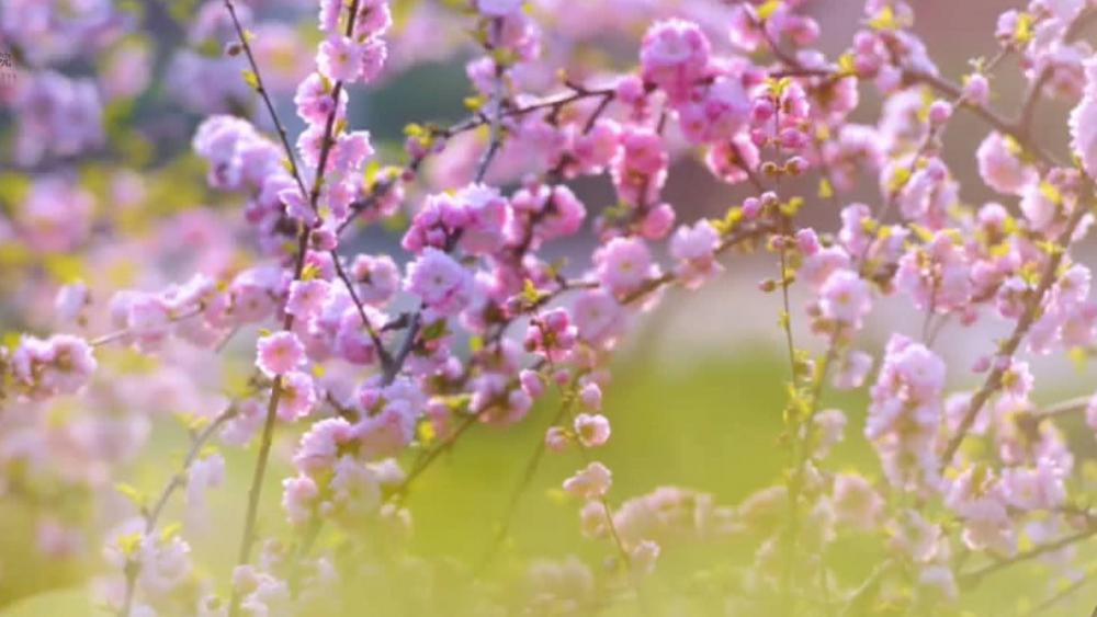 山东协和学院的满园春色已发送,请接收!