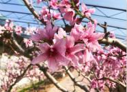 组图丨最是一年春好处!威海垛顶山公园赏花正当时