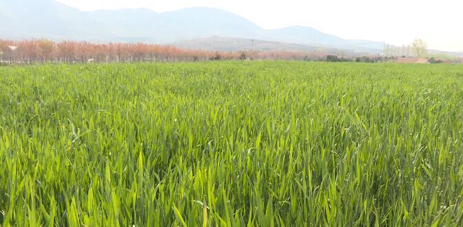 26秒丨日照市春播暨小麦中后期管理现场会在五莲召开
