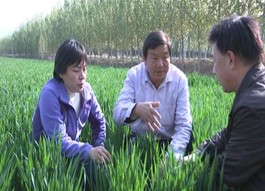 38秒丨滨州邹平农技专家走上田间地头 指导谷雨时节小麦管理
