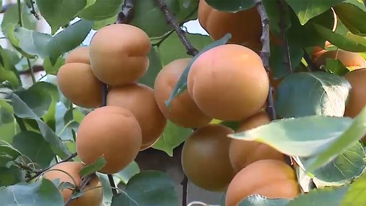 64秒|邹平市黄山街道发展特色种植 实现生态致富 助力乡村振兴