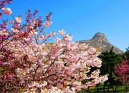 39秒丨小长假遇上艳阳天!威海里口山开启踏青赏花模式