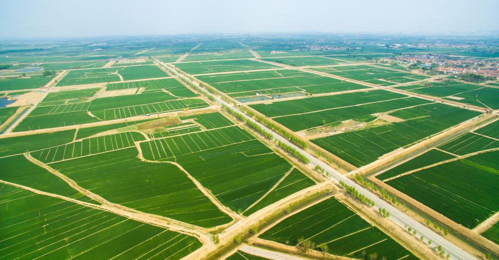 滨州市滨城区高标准农田建设再增3万亩 总面积达29.29万亩
