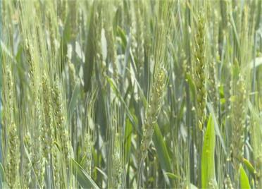 威海环翠区:雨后农田忙种植 农业专家来帮忙