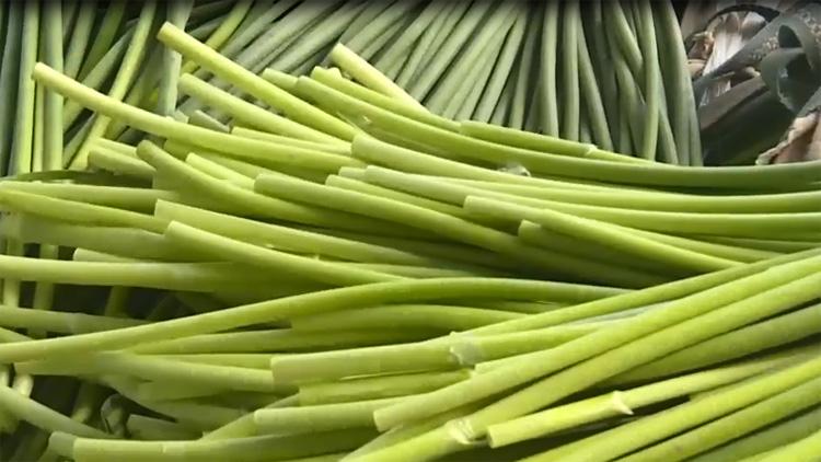 42秒|滨州惠民李庄镇:蒜农喜获丰收 蒜薹产销两旺