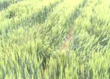 威海市环翠区:雨后农业生产忙 专家帮助增丰收