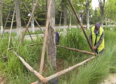 """大风肆虐树木""""受伤"""" 威海环翠区园林部门及时清理除患"""