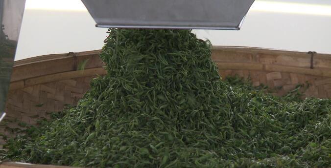 29秒丨日照五莲叩官镇:着力打造高品质茶叶原产地