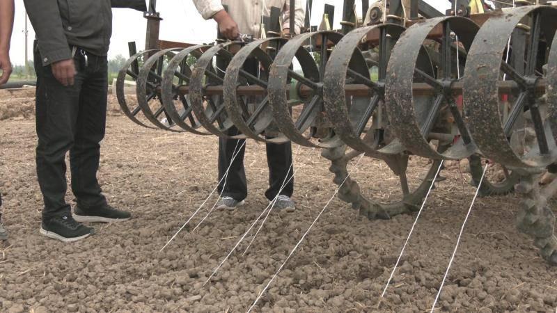 育秧效率提高超10倍!济宁市任城区大力推广水稻育秧新技术 提升秧苗品质