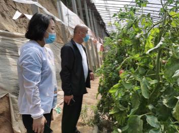 武城县农业农村局:做好蔬菜网格化服务  保障舌尖安全