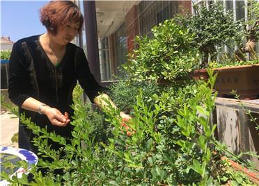 寿光:绿茵花草绕庭院  庭院如同百花园
