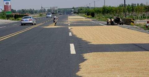 预防交通事故!金乡县发布通告,禁止在公路上打场晒粮