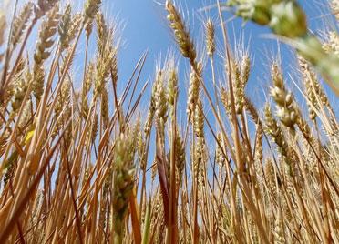 """52秒丨备战""""三夏""""! 德州平原建成8处为农服务中心 发展订单农业6万亩"""