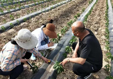德州武城:抓好新技术试验 助力农业增收
