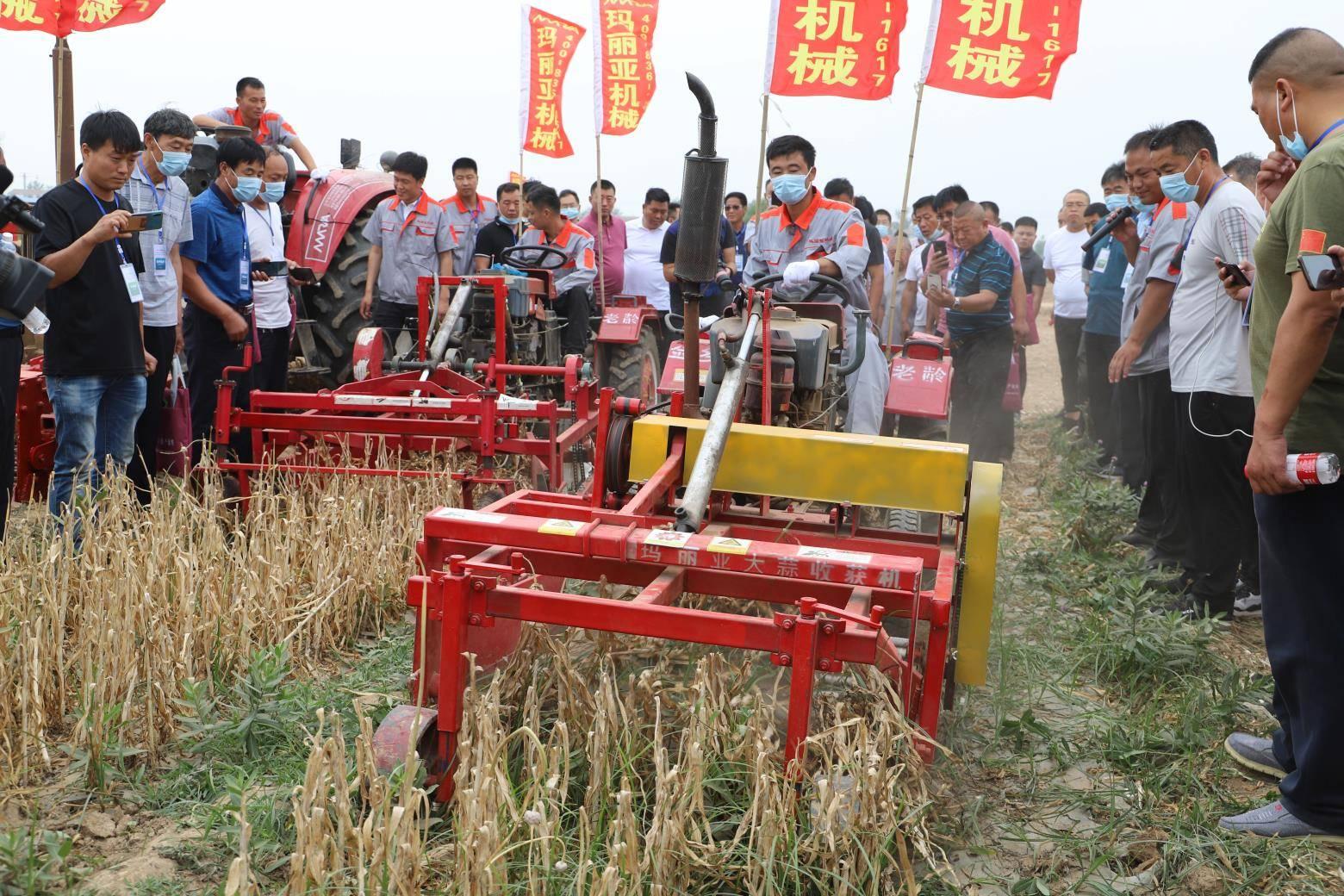 中国大蒜看金乡!金乡大蒜全程机械化现场演示吸引全国农机专家围观