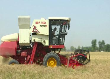 41秒丨德州武城64万亩小麦丰收在即 1300台收割机助力麦收