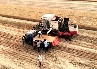 喜丰收!聊城市麦收接近尾声,麦收面积已过九成