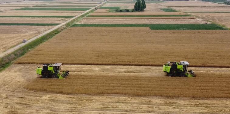 25秒丨日照市小麦进入大面积收获期 截至6月11号收获56.64万亩