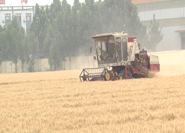 38秒 | 滨州博兴54万亩小麦麦收工作全面展开 优质小麦助力增产增收