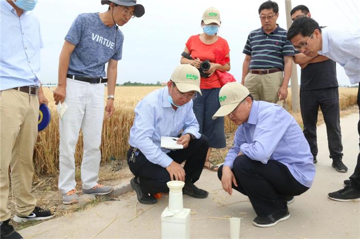 平均亩产732.23公斤 济麦44创全国超强筋小麦单产纪录