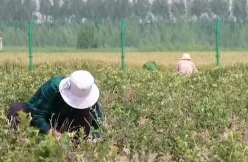 省派利津县乡村振兴服务队:打造可持续发展的为民产业