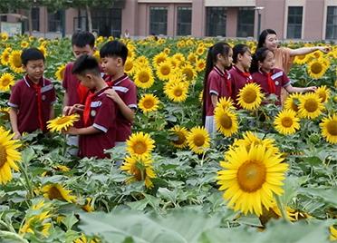 """91秒丨德州这所学校""""藏""""着一片向日葵花海 孩子们劳动中感受丰收的喜悦"""
