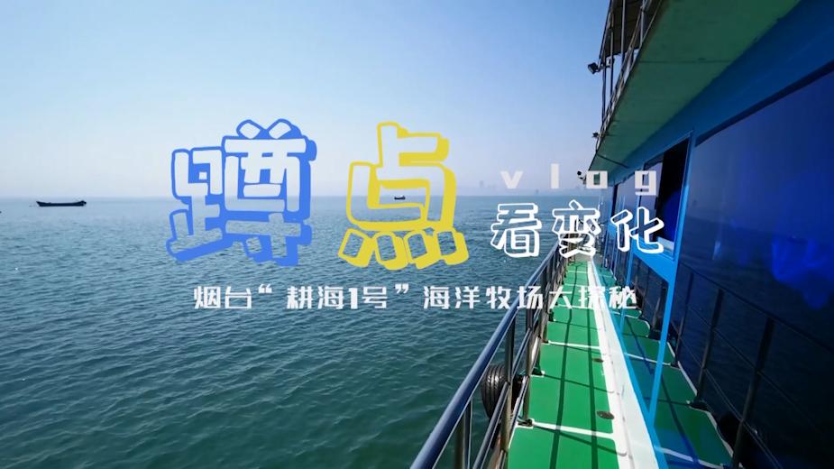 """蹲点Vlog丨打卡烟台5G海洋牧场""""耕海1号""""渔业养殖+海洋文旅跨界成新时尚"""