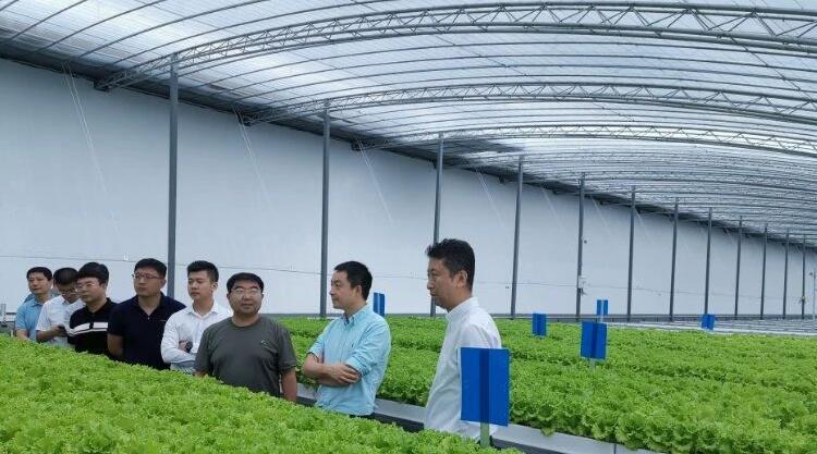 43秒|寿光阿里数字蔬菜工厂正式育苗投产 预计每亩产量提高4-6倍