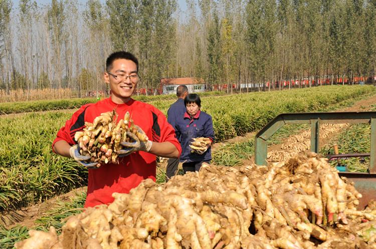 """中国首批100个地理标志受欧盟保护 """"安丘大姜""""""""安丘大葱""""入选"""