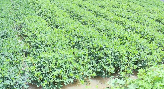 30秒丨日照莒县农业技术人员指导受灾农作物田间管理