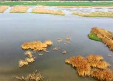 采煤塌陷地变身生态园!山东创新方式 累计治理塌陷区78万亩