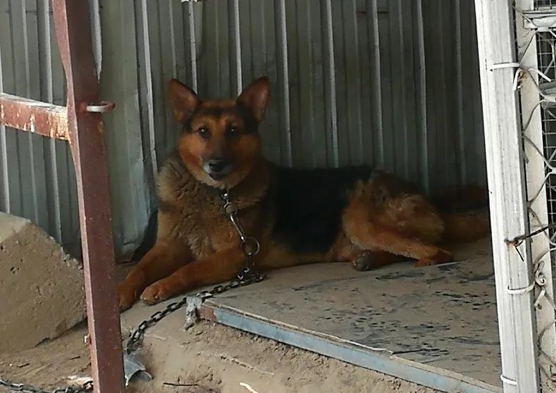 针对不文明养犬行为 滨州滨城公安开出第一张罚单