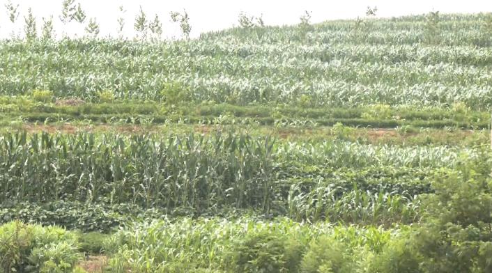 28秒丨日照岚山:开展雨后农作物管理指导工作 减少因暴雨造成的影响和损失