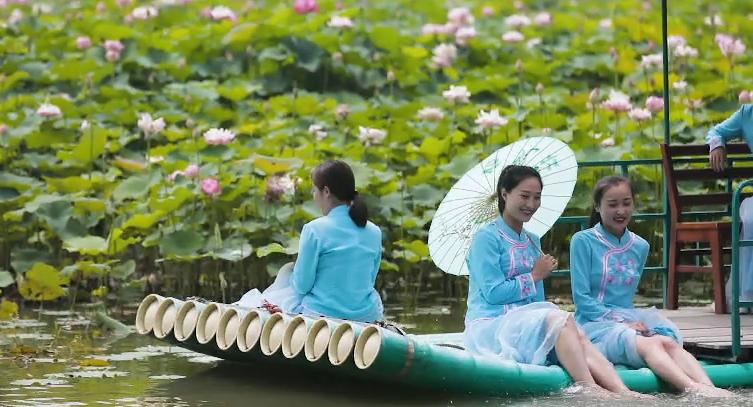这就是山东丨荷塘美人拍了拍你 约在台儿庄运河湿地品别样夏日