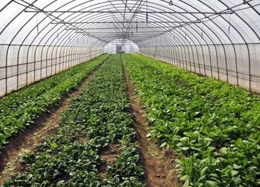 诸城:激活农业发展潜能 让百姓在家门口就业