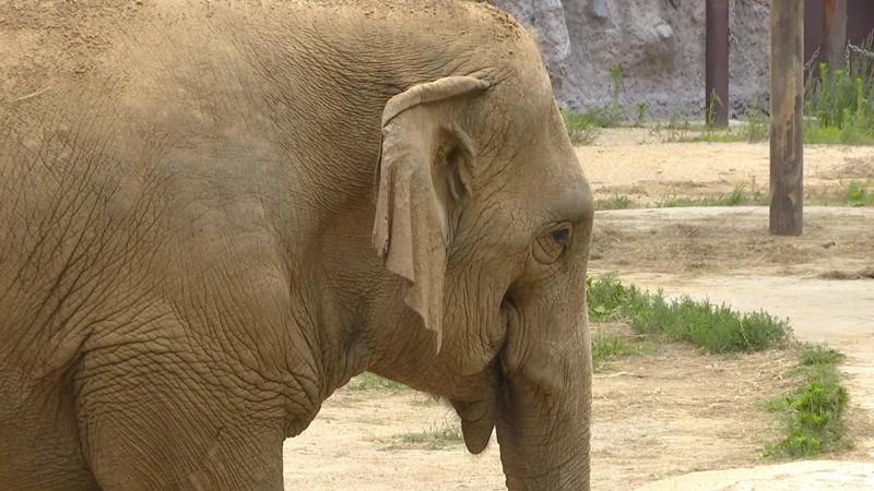 82秒 世界大象日:关注亚洲象 为爱发声