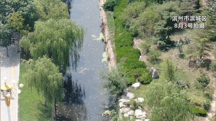 问政追踪|两条河道黑臭水体严重 滨州住建局:11月底彻底完成治理