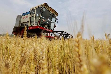 权威发布|4212亿!山东粮食产业经济工业总产值稳居全国首位