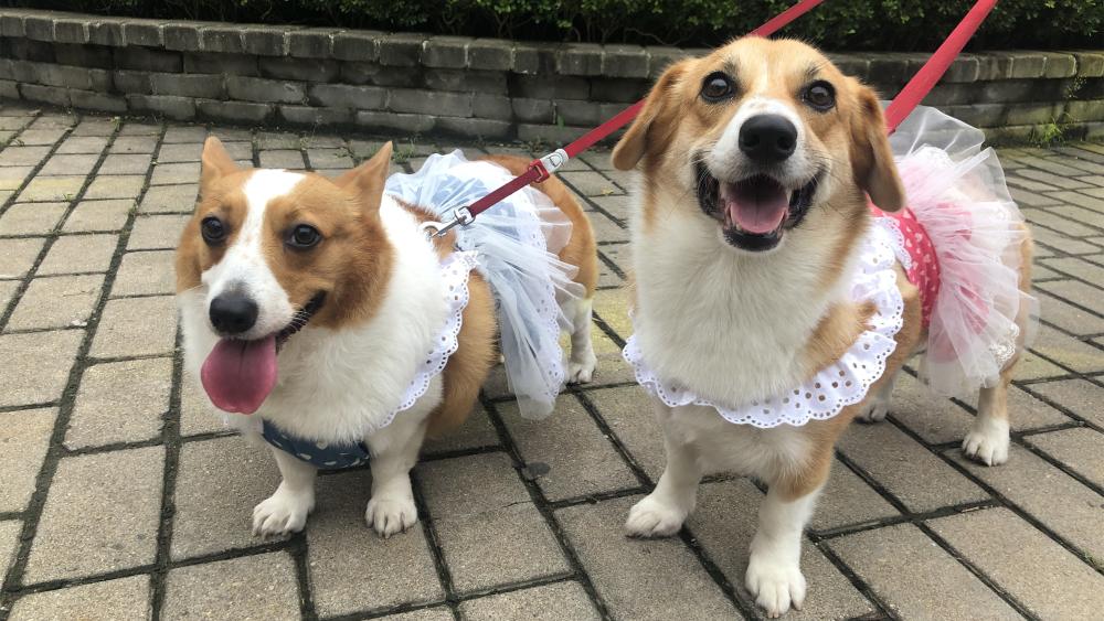 Vlog丨红叶谷景区变萌宠乐园!快跟随记者一起去看宠物盛会