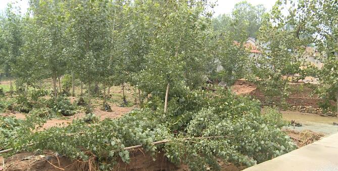 25秒丨莒县夏庄镇包村干部迅速下沉到村 对受灾情况进行详细摸排