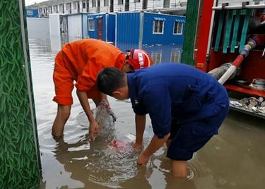 49秒 致敬!积水中为村庄排涝,脚伤二次复发的他仍在继续战斗