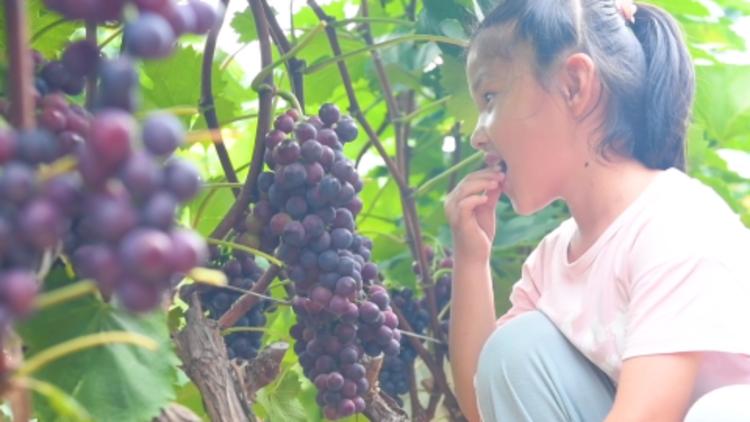 24秒丨丰收的甜蜜,威海南海新区采摘园里瓜果飘香