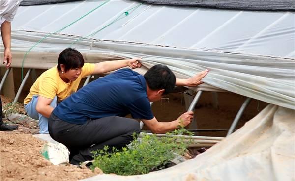 """69秒丨东营将迎来强降雨天气 农业部门全力迎战台风""""巴威"""""""