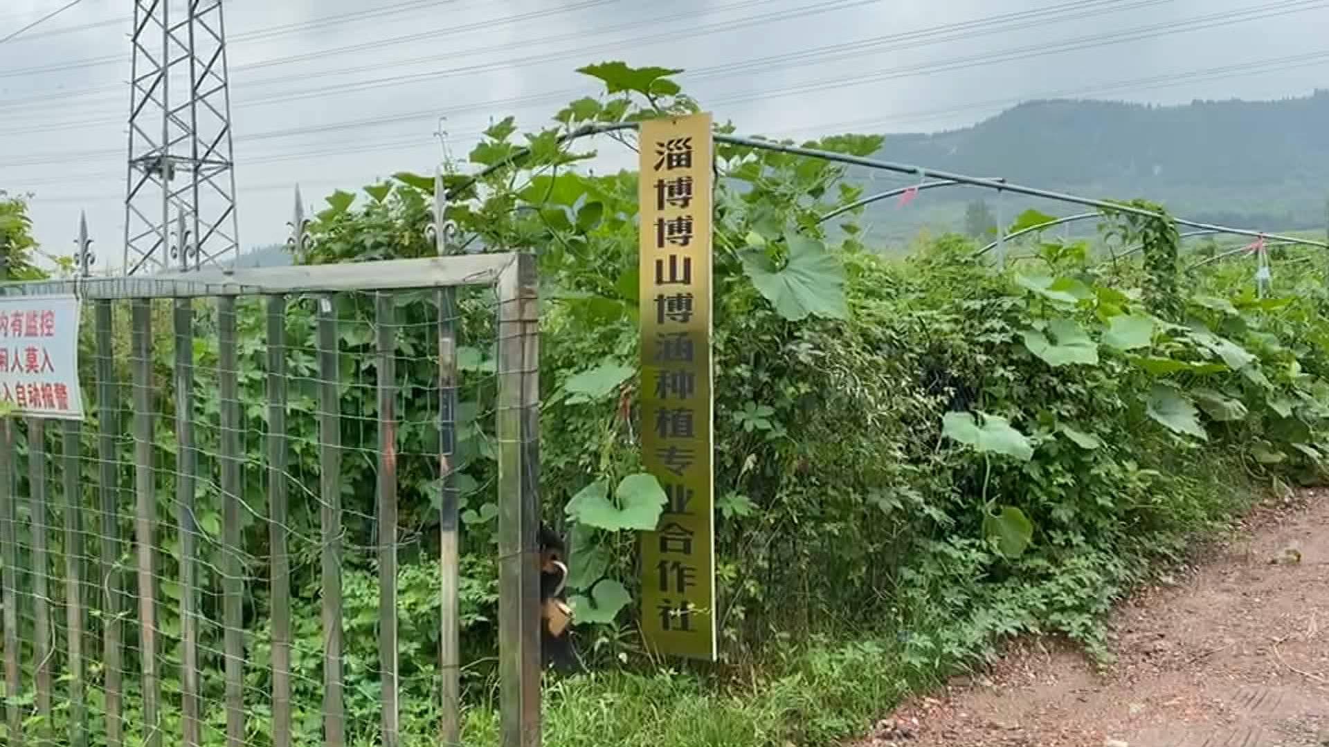 问政追踪|淄博种植专业合作社已通电 负责人:农场有了新规划