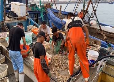 41秒|金秋第一鲜!威海开海第一网 肥美海鲜应有尽有