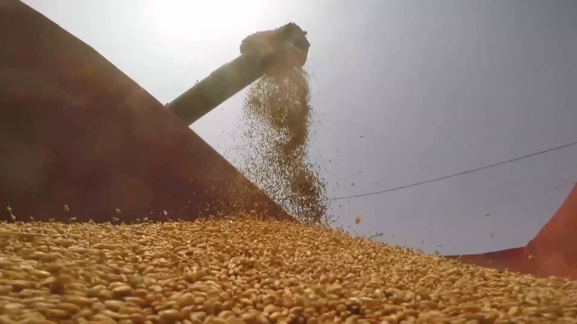 微视频 | 一粒小麦的旅行