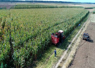 67秒|山东何时收玉米种小麦?专家:适当晚收夏玉米 国庆节期间播种冬小麦