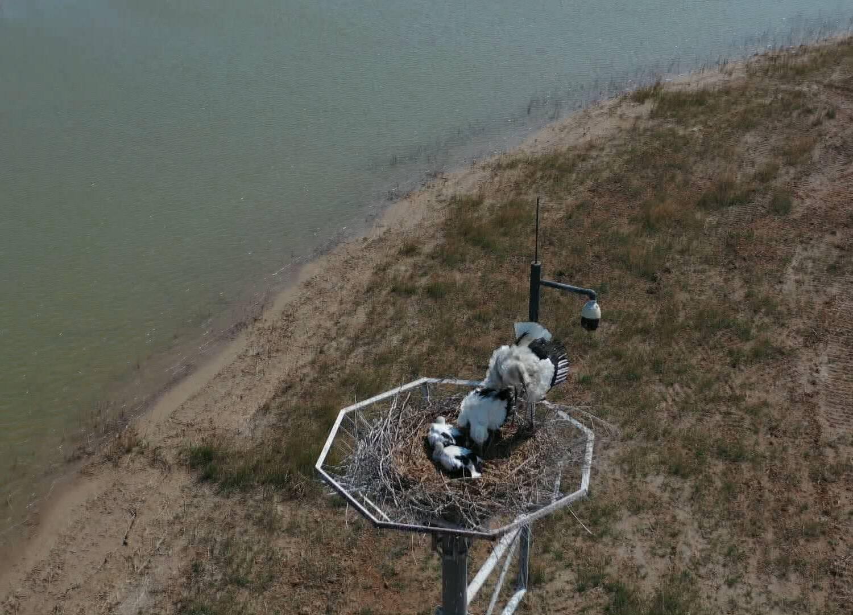 九曲黄河V挑战 | 在东营黄河入海口打卡珍惜鸟类钟爱保护区